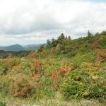 栗駒山荘の温泉を堪能!秋田の紅葉はもうはじまっていた